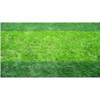 贵州人造草坪 贵州人造草坪批发商 贵州人造草坪生产商家