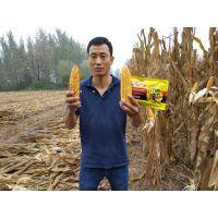 昆仑风玉米增产套餐套餐芸乐收新配方