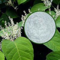 白藜蘆醇98%-久瑞生物