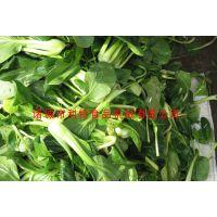 气泡式果蔬清洗机 蔬菜清洗机设备 利特果蔬加工生产线