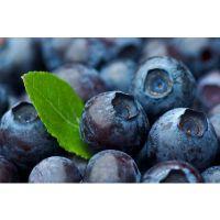 蓝莓,野生蓝莓,浓缩汁,原装进口