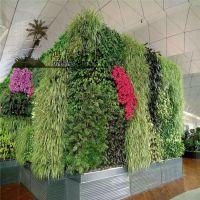 深圳植物墙,广州植物墙,仿真植物墙批发定制
