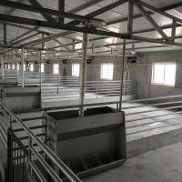母猪专用 自动食槽 不锈钢双面料槽 干湿食槽