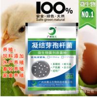 真凝结芽孢杆菌厂家凝结芽孢杆菌饲料添加剂饲料级凝结芽孢杆菌