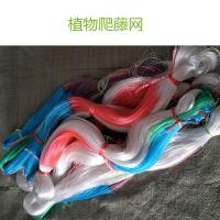 苦瓜爬藤网价格 宽两米 四米 100米长 耐光晒抗老化塑料线材编织 安平上善