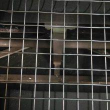 pvc焊接网 大型电焊网 优质碰焊网