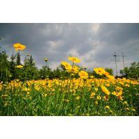 小区、公路、景区花卉,道路两侧常见的花卉种类@茗茜