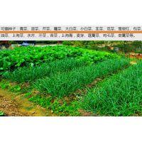 优质荠菜播种机 6行手推香菜种植机 蔬菜播种机厂家