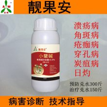 火龙果柑橘溃疡病发病原因及防治用药 杀菌剂靓果安厂家供应