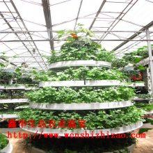 水培种菜机盆 泡沫立体种植墙 温室大棚无土栽培建设及报价