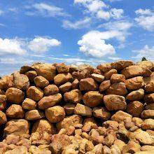 英德人气小型黄蜡石吨位石 园林景观石黄蜡石直销