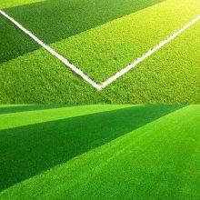 锦州塑料草坪人造草坪厂家 足球场假草坪造价 幼儿园专用草皮