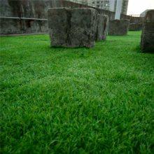汽车坐位下面地毯垫子铺设草皮后备箱防尘绿色人造草坪
