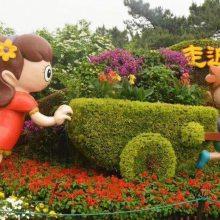 贵州五色草真植物雕塑造型 定制草花摆放立体花坛绿雕出售