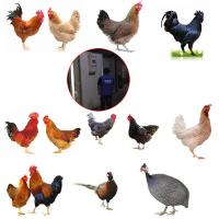 各种鸡苗 全国发货杂交鸡苗 鸡苗孵化基地在那 长顺绿壳鸡苗手机号码