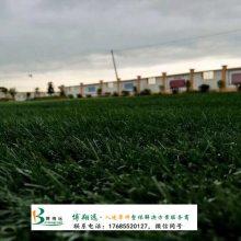足球场的草皮多少钱一平方米