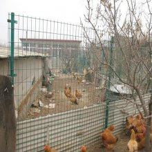 A养鸡专用铁丝网A养鸡用铁丝勾丝网A镀锌铁丝网