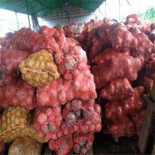 魔芋种子厂家联系方式 寻甸魔芋种子 恭城魔芋种子价格