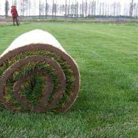 篮球场围挡户外人造草皮 1.5mm塑料展览运动人造草皮 公园高尔夫球场果岭专用草