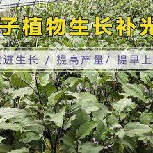 空心菜蔬菜补光灯-呼和浩特蔬菜补光灯-雏鹰植物补光灯(查看)