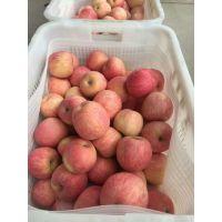 红富士苹果产地直供 价格低 新鲜直达