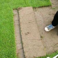 马尼拉草皮卷 狗牙根百慕大混播 江西宜春公路护坡绿化用的结缕草出售价格 性价比