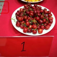 3cm樱桃苗、3cm樱桃苗现货