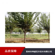 服务区绿化工程苗木_菏泽红王子锦带容器苗价格