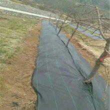 黑色防草布在北京蓝莓园的固定方法