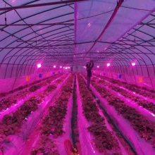大棚种植大面积植物照明灯LED植物补光灯生长灯