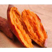 湛江白杨农业西瓜红番薯批发 产地直发 西瓜红番薯种植基地