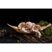 云南特产 野生香菇菌鲜品 新鲜香菇批发 云上猿食用菌产地直发