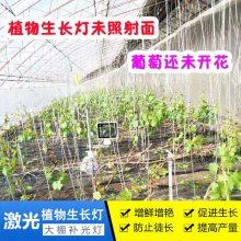 植物生长灯多少钱- led植物生长灯原理-广西植物生长灯