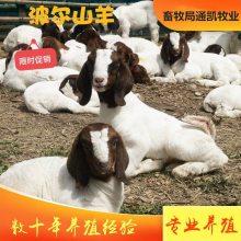 养羊50只一年赚多少钱 养羊的利润与成本 养羊利润怎么样
