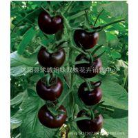 基地黑珍珠番茄种子 小番茄 不易裂果蕃茄 20粒/包 花仙子彩包