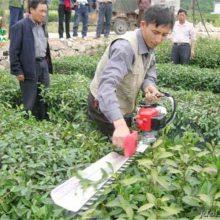 轻便耐用的高枝锯 花树造型绿篱修剪机 树木修枝打树机