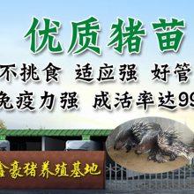 鑫鑫豪猪养殖场告诉你豪猪的饲料种类都有哪些?