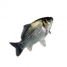 玉米蛋白粉膨化机,膨化鱼饲料颗粒机