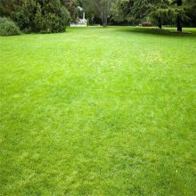 假草皮密度 墙面假草皮安装价格 卧室仿真草