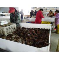 潜江小龙虾批发市场11元每斤起供应清水鲜活26~30只/kg小龙虾