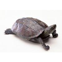 物陆龟水果粮饲料加工设备 宠物饲料颗粒机械