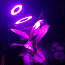 LED植物生长灯/夹子灯/厂家批发/量大价优/深圳供货/电商优选