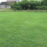 聚乙烯围挡户外人造草皮 塑料展览运动户外人造草皮 1.5公分高尔夫球场果岭专用草