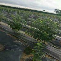 江苏编织防草布 果园铺设盖草地布规格