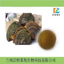 桑黄提取物 规格10:1 桑黄粉 桑黄浓缩粉 优质原料供应 量大从优