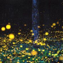 感应萤火虫灯 户外防水LED萤火虫 万棵松