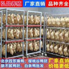 临汾鸭胚-冻鸭胚制作-弘昌养殖设备(优质商家)