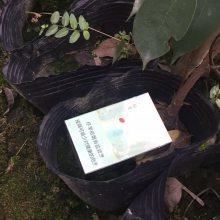 垫江县武隆县油麻藤批发基地 大量出售常绿油麻藤小苗价格