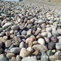 安达供应鹅卵石 天然鹅卵石 鹅卵石厂家