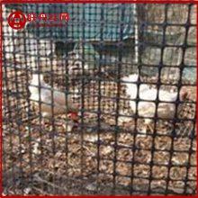 养殖网 小孔养殖网 耐老化小孔养殖网多少钱一米